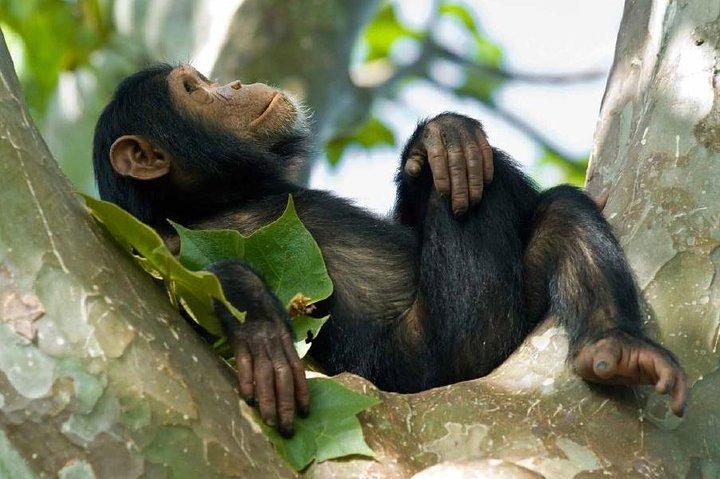5 days best primate safaris